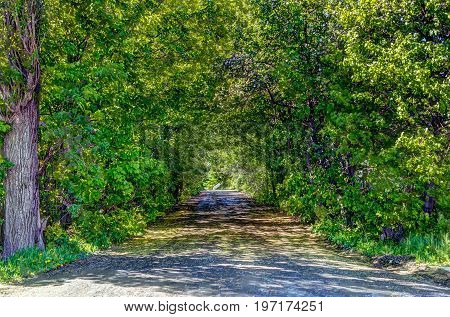 Forest path landscape passage covered with branches in Europe during summer