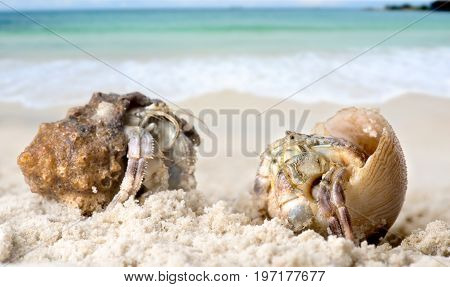 Life Hermit Crab On The Beach