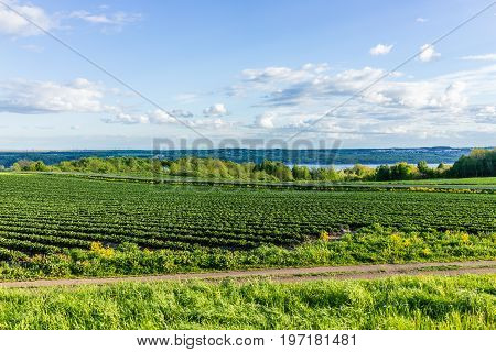 Landscape View Of Farm In Ile D'orleans, Quebec, Canada With Green Rows Of Plants