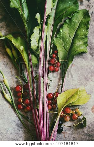 Variety of raw organic young vegetables beetroot with haulm, garlic, leaf salad, red currant over gray texture background. Top view