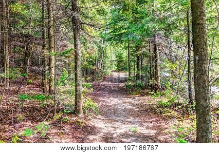 Enchanted pine forest by beach shore with trail path in Baie-Saint-Paul in Quebec Canada