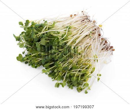 kaiware sprout japanese vegetable or watercress on white background
