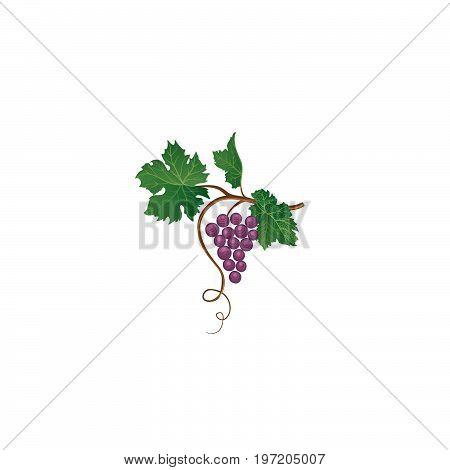 Grape Branch. Floral Wineyard Retro Sign. Garden Background. Win