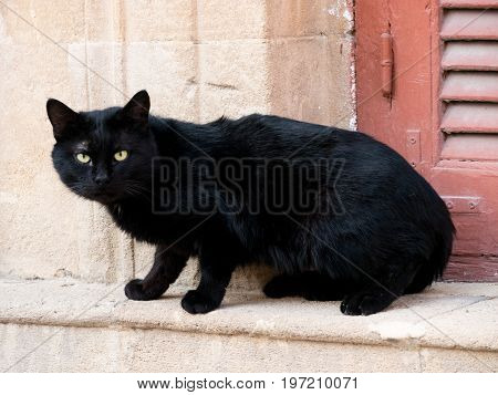 Black domestic cat sits at a window in sunshine