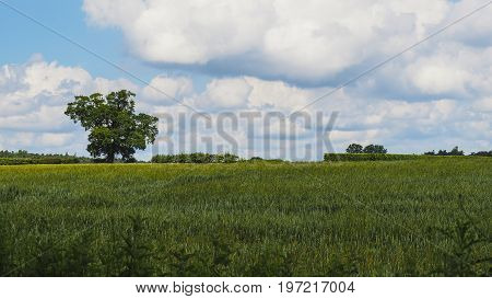 A field in rural England with a few scattered hedges and trees.