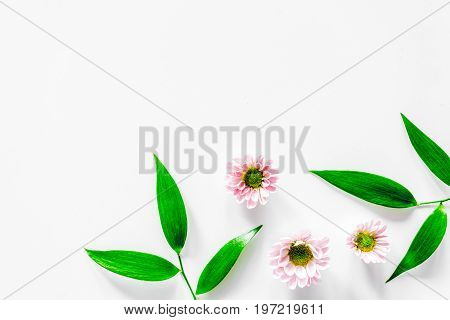 Little pink flower on white background top view copyspace.