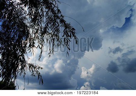 Dramatic cloudy sky, viewed through the wiping branches of the treetop