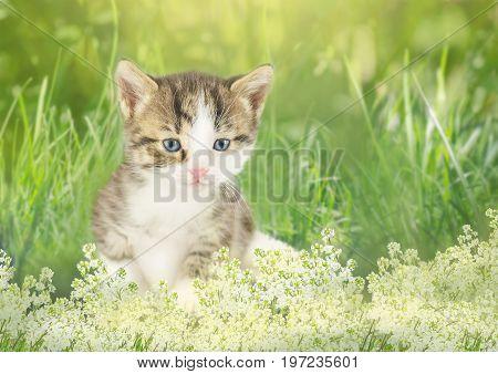Little kitten sitting in flowers. Kitten sitting near a flowerbed