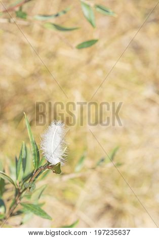 White downy peaceful fluffy feather in a light breeze concept of freedom ease relaxation carefree or condolence background