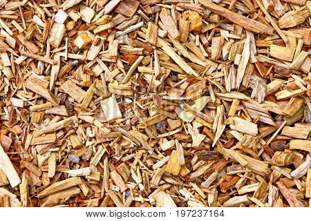 Texture of mulch. Natural background of wood chips