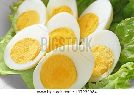 Sliced hard boiled eggs with lettuce, closeup. Nutrition concept