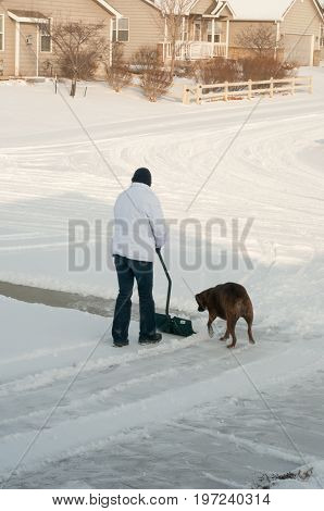 Family pet playing while woman shovels snow from driveway