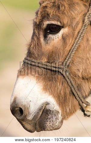 donkey . Detailed photo in the park in the nature