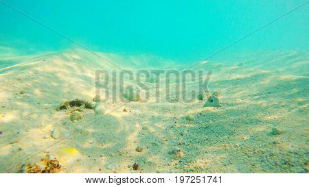 Underwater view of the sand during a bright sunny day. Nassau, Bahamas.