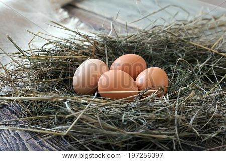 Chicken eggs in the chicken coop. Eggs lie in the hay on wooden boards.