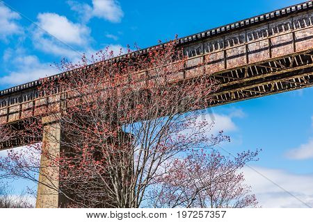 Railroad Old Bridge With Red Tree In Accotink Park