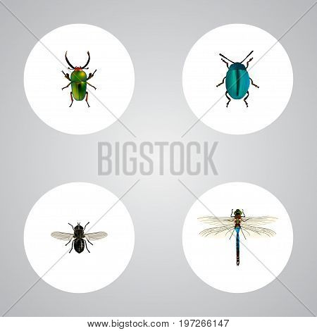 Realistic Midge, Insect, Damselfly And Other Vector Elements