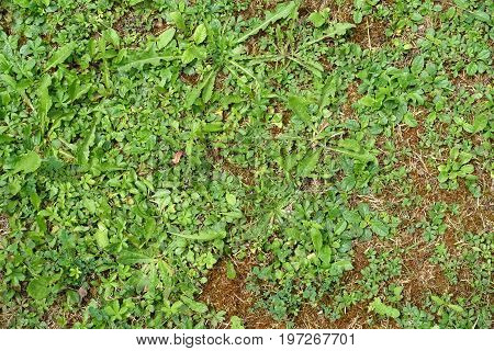 Top view of ground covered in weeds