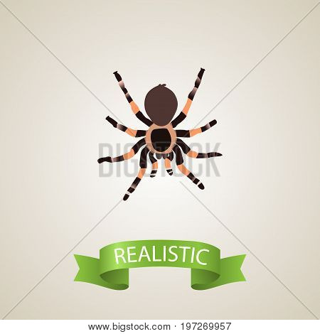 Realistic Black Widow Element. Vector Illustration Of Realistic Tarantula Isolated On Clean Background
