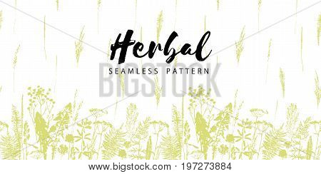 Herbal seamless pattern. Botanical border. Vector grass background. Design element for green, organic, eco, herbal medicine and other uses.