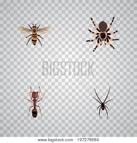 Realistic Spinner, Tarantula, Wasp And Other Vector Elements