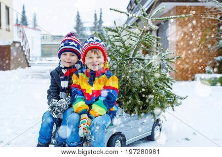 Two little kid boys driving toy car with Christmas tree. Happy children, siblings, twins, friends in winter fashion clothes bringing hewed xmas tree from snowy forest. Family, tradition, holiday