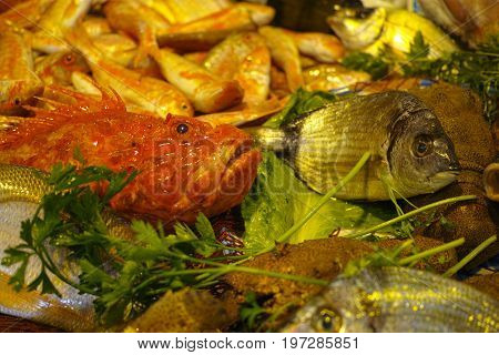 Fisherman's Catch Of Fresh Raw Fish From Aegean Sea, Sicily, Italy, Ready To Cook, On Ice
