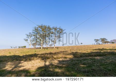 Trees Grass Field Landscape