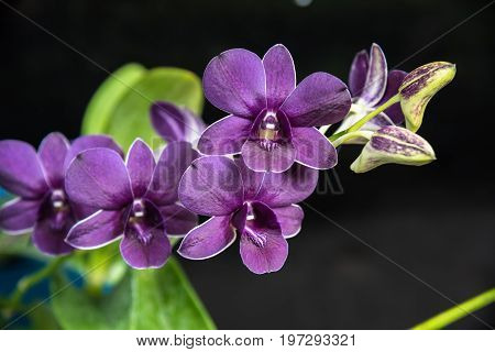 Beautiful orchids were blooming in the nature