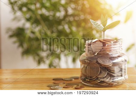 young plant growing up on jar of money coins on wood table concept as save growth plan finance account stock market and capital banking