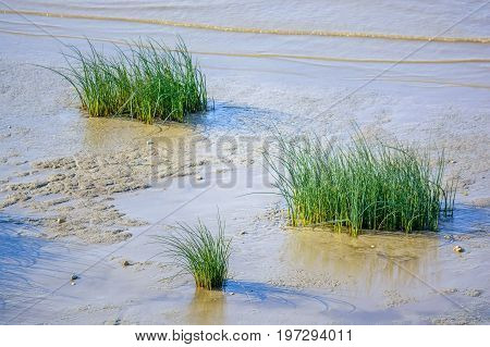 Close up young river cane growing on shore