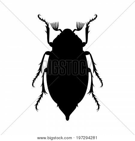 May beetle or cockchafer, or tree-beetle, shade picture