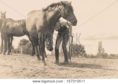 Animal and human love equine concept. Jockey woman taking care of horse