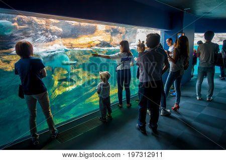 OSAKA, JAPAN - JULY 18, 2017: Dolphin in Osaka Aquarium Kaiyukan, one of the largest public aquariums in the world in Osaka, Japan.