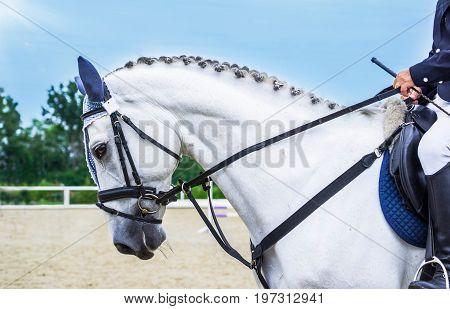 Dressage horse and rider. White horse portrait during dressage competition. Advanced dressage test.