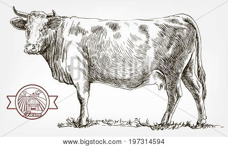 breeding cow. grazing cattle. animal husbandry. livestock. vector sketch on a grey background poster
