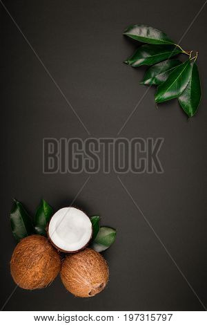 Whole fresh and tropical coconuts on a dark background. Anti-ageing, anti-carcinogenic tropical fruits. Whole and crushed in a half coconuts with leaves on a black background.