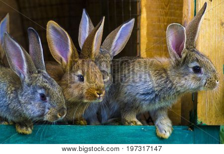 little rabbits. rabbit in farm cage or hutch. Breeding rabbits concept.Rabbits