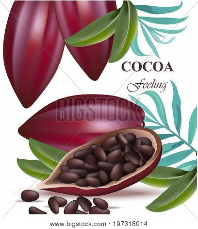 Cocoa beans fruit realistic detailed Vector illustrations