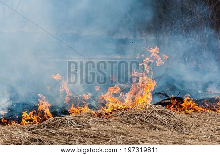 The Burning Dry Grass With Opaque Dense Bluish Smoke