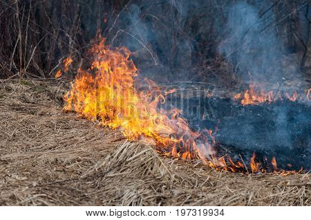 A Large Forest Fire With High Spurts Of Flame