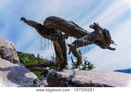 Natural Still Life- Whimsical Sculpture Of Tree
