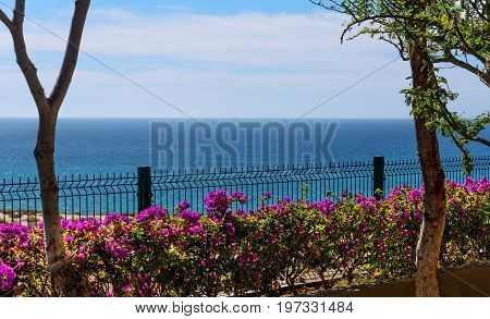 Sea of Cortez on the horizon with a beautiful display of bougainvillea along the fence.