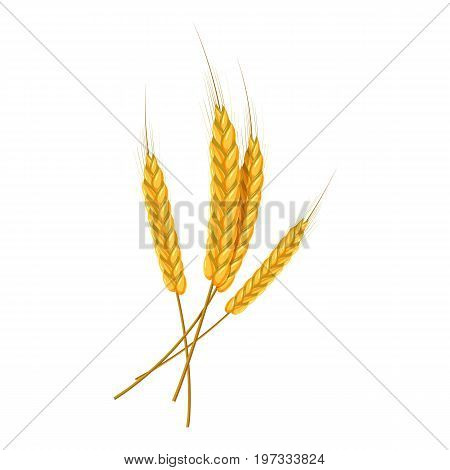 Four wheat ears icon. Cartoon illustration of wheat ears vector icon for web design