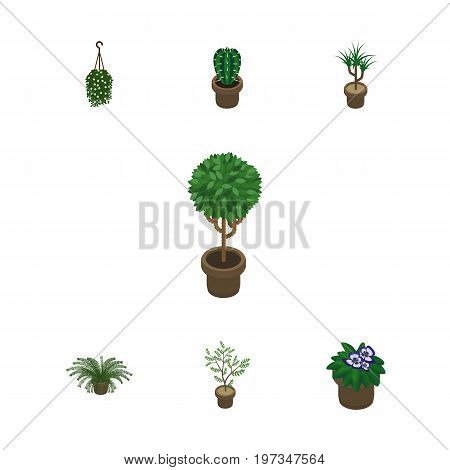 Isometric Houseplant Set Of Peyote, Blossom, Plant And Other Vector Objects