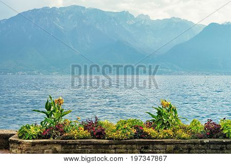 Nature Of Geneva Lake In Vevey Switzerland