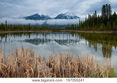 Reeds at Vermillion Lakes in Banff National Park, Alberta, Canada with low clouds in front of the background mountains.