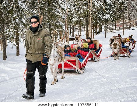 Reindeer Sled Caravan Safari With People Forest Lapland Northern Finland