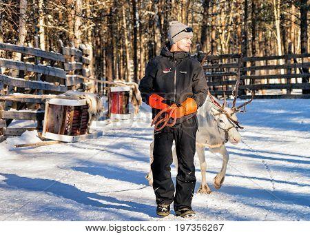 Man With Reindeer In Winter Rovaniemi Lapland Northern Finland