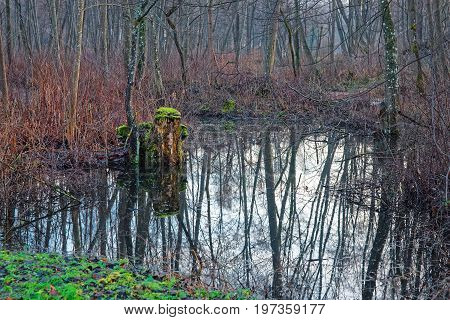 Backwaters In Forest In Belmontas Pavilniai Regional Park Vilnius Baltic